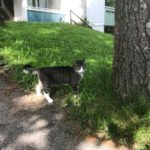 ラハティで滞在していたアパートの猫とのこと。縄張りに入ったので「キッ」としてるけどそこが可愛い!!